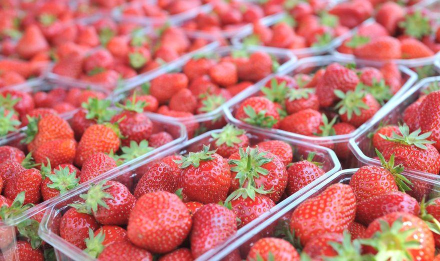 Javni poziv za predaju zahtjeva za dodjelu paketa za proizvodnju jagode pod niskim tunelima i na otvorenom polju uz sufinansiranje Projekta